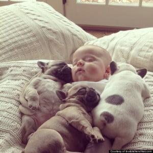 bebe-perros-durmiendo